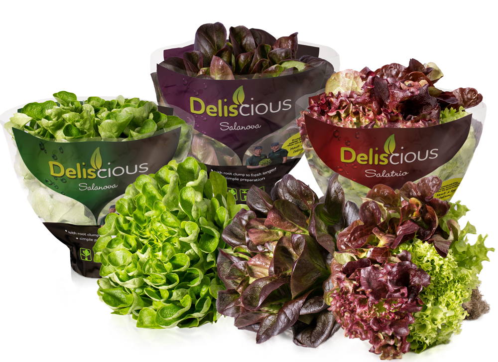 unser salat mit wurzelballen delicious. Black Bedroom Furniture Sets. Home Design Ideas